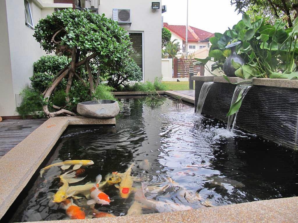 Cara Meneteralkan pH Air pada Kolam Ikan Hias